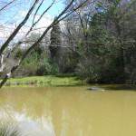 pond 10