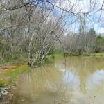 pond 11