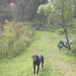 pond-gallery-far-trail-w-dog